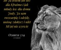 Księga Ozeasza 5:14