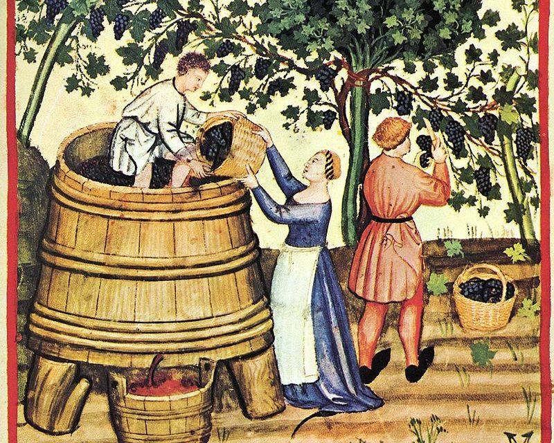 Deptanie winogron (ilustracja z 14-wiecznej księgi Tacuinum Sanitatis) / fot. Wikipedia