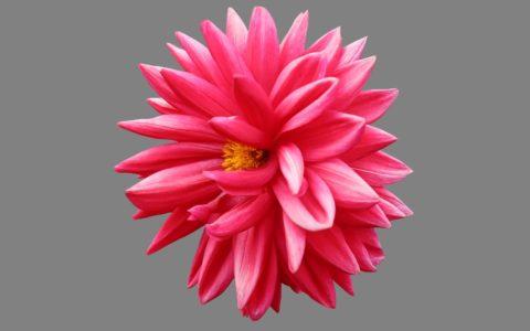 rośliny to dowód na potężną moc Boga, objawiającą się w stwarzaniu