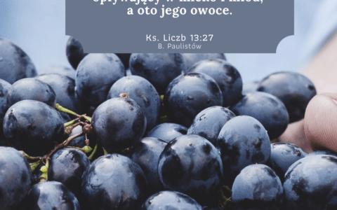 Księga Liczb 13:27