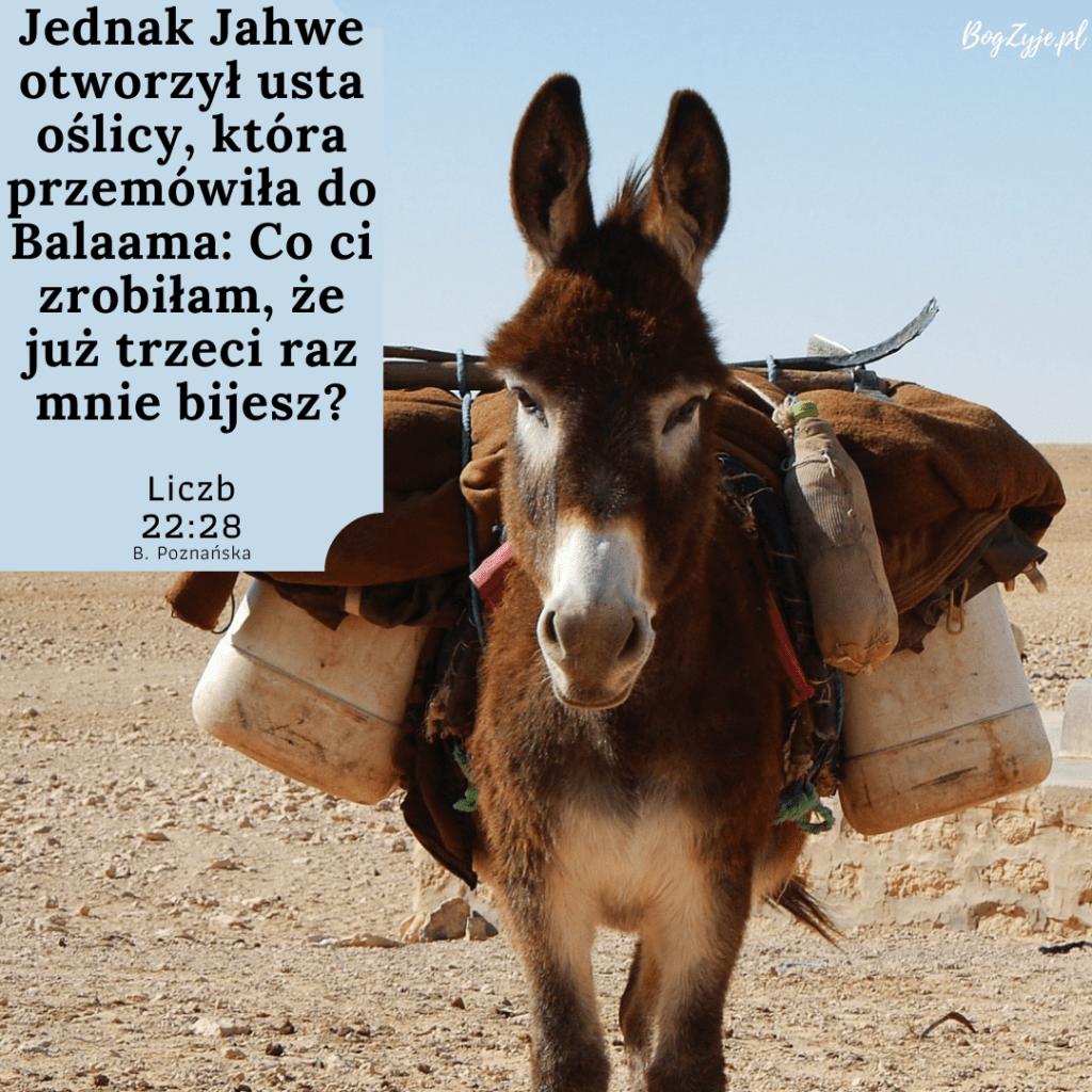 Księga Liczb 22:28