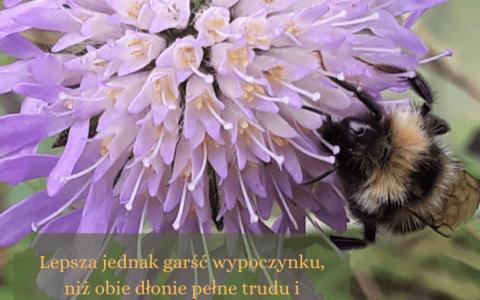 """Kaznodziei 4:6/ artykuł: """"Cytaty z Księgi Koheleta"""""""